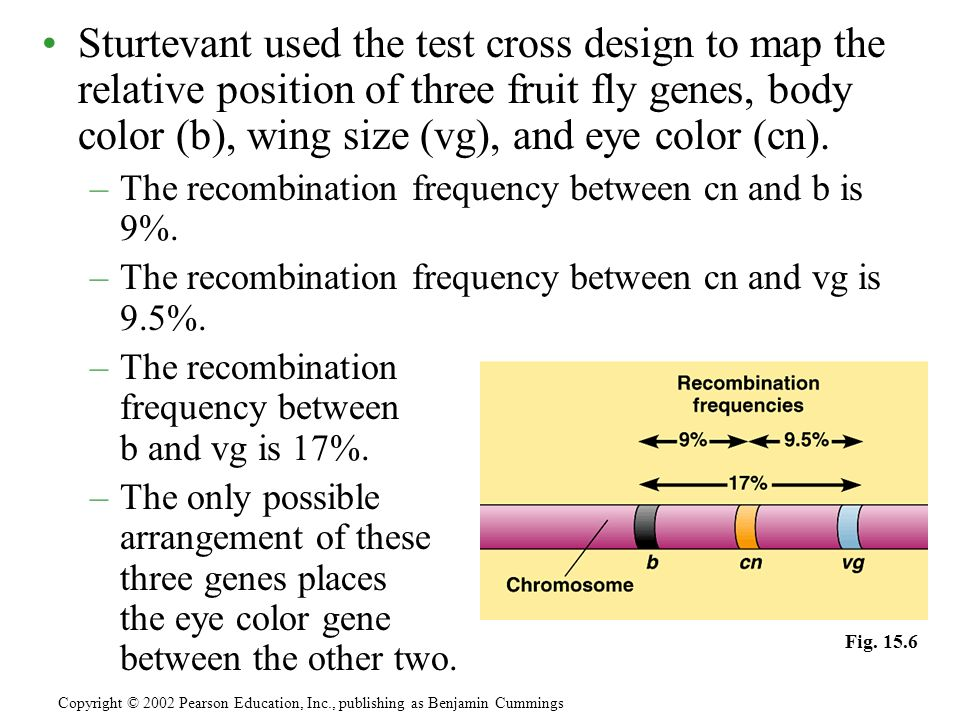 Sturtevant used the test cross design to map the relative position of three fruit fly genes, body color (b), wing size (vg), and eye color (cn).
