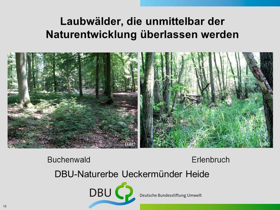 16 Laubwälder, die unmittelbar der Naturentwicklung überlassen werden Buchenwald Erlenbruch DBU DBU-Naturerbe Ueckermünder Heide