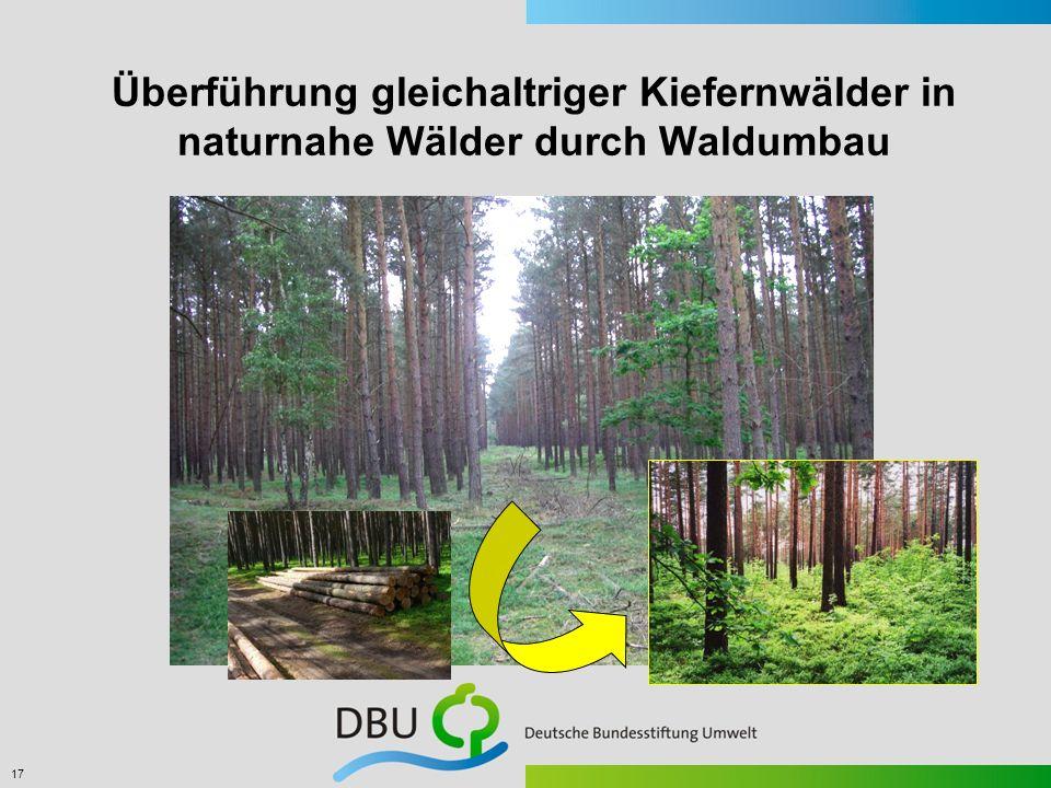 17 Überführung gleichaltriger Kiefernwälder in naturnahe Wälder durch Waldumbau
