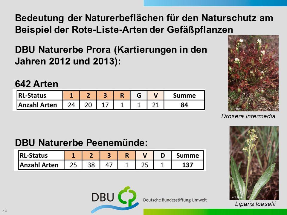 19 Bedeutung der Naturerbeflächen für den Naturschutz am Beispiel der Rote-Liste-Arten der Gefäßpflanzen DBU Naturerbe Prora (Kartierungen in den Jahr