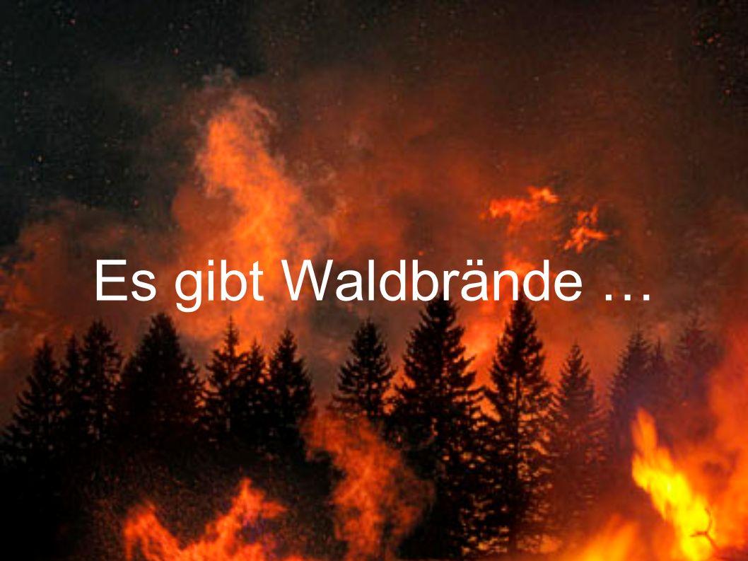 Es gibt Waldbrände …