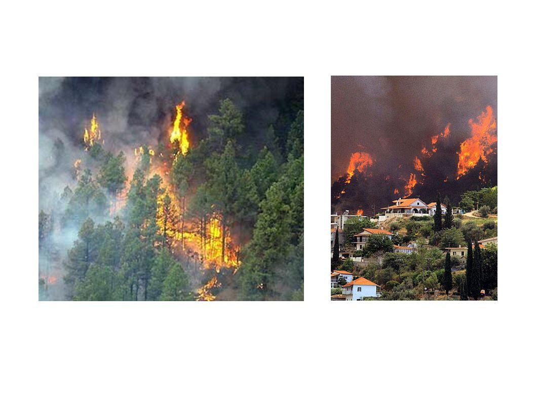 Aufgabe: Füge bei gegeber Windrose und Brandwiderstandsmatrix möglichst wenig Brandherde so in die Brandverlaufsmatrix ein, dass letztlich alles verbrannt ist!
