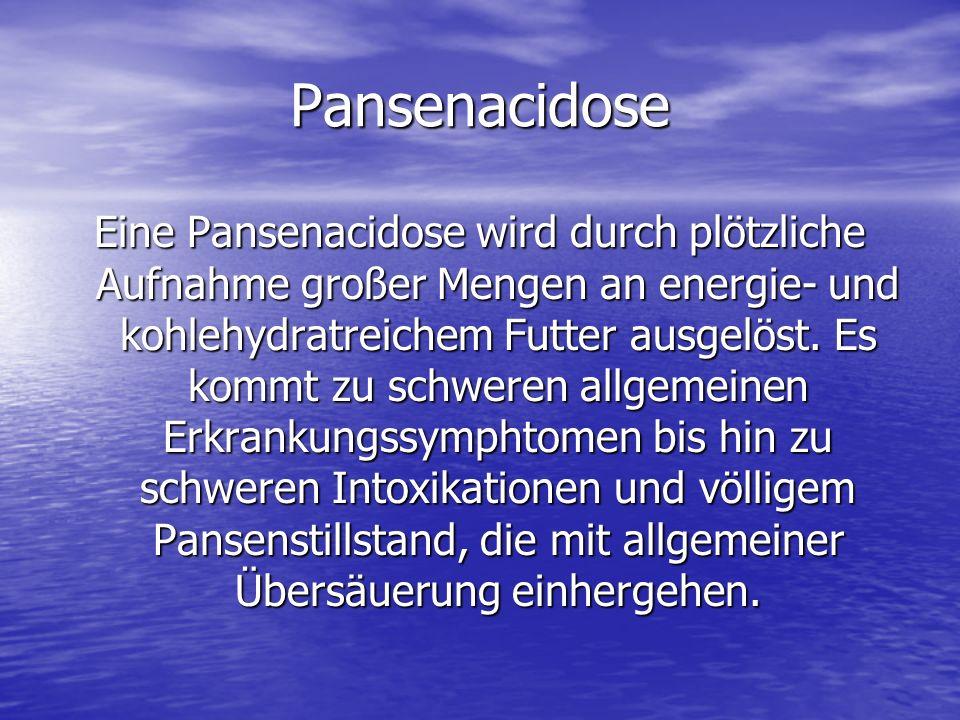 Pansenacidose Eine Pansenacidose wird durch plötzliche Aufnahme großer Mengen an energie- und kohlehydratreichem Futter ausgelöst. Es kommt zu schwere