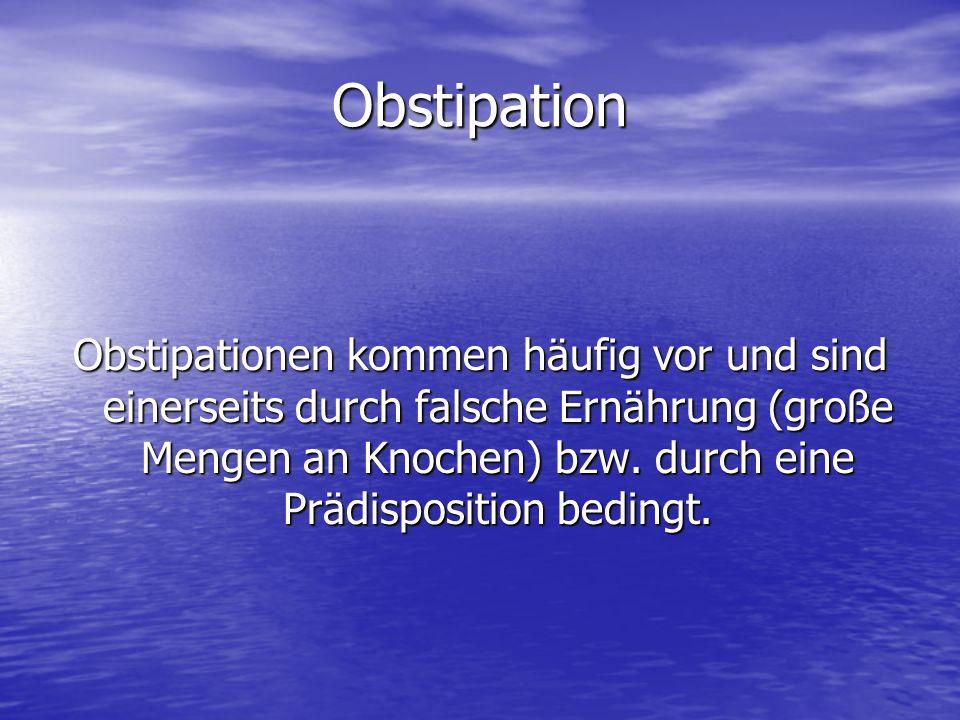 Obstipation Obstipationen kommen häufig vor und sind einerseits durch falsche Ernährung (große Mengen an Knochen) bzw. durch eine Prädisposition bedin