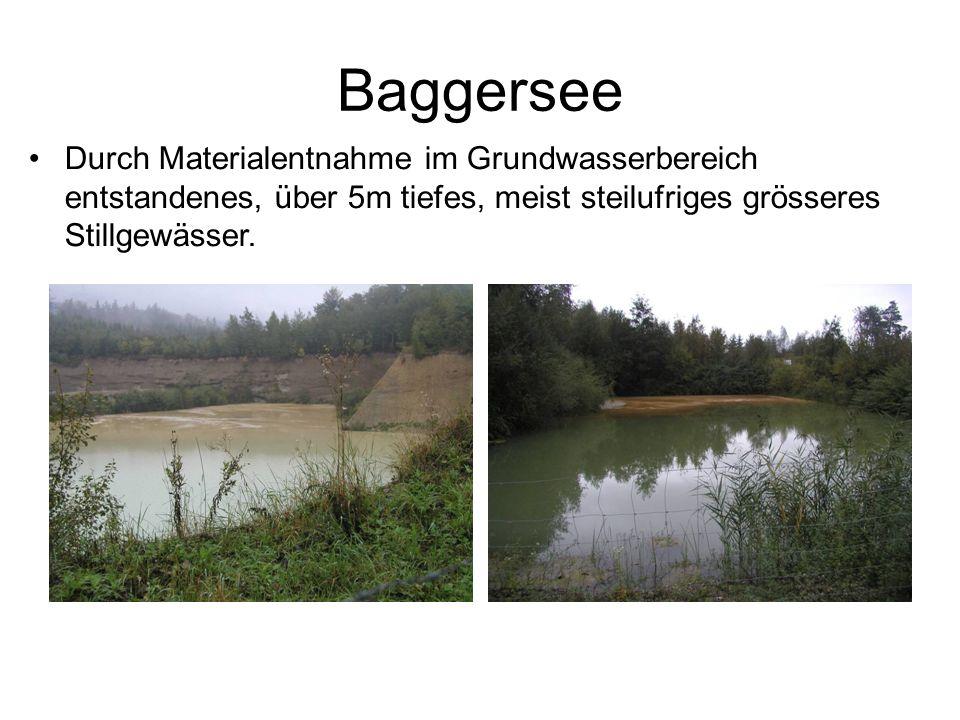 Baggersee Durch Materialentnahme im Grundwasserbereich entstandenes, über 5m tiefes, meist steilufriges grösseres Stillgewässer.