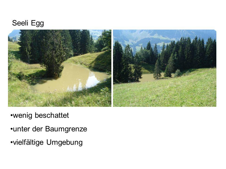wenig beschattet unter der Baumgrenze vielfältige Umgebung Seeli Egg