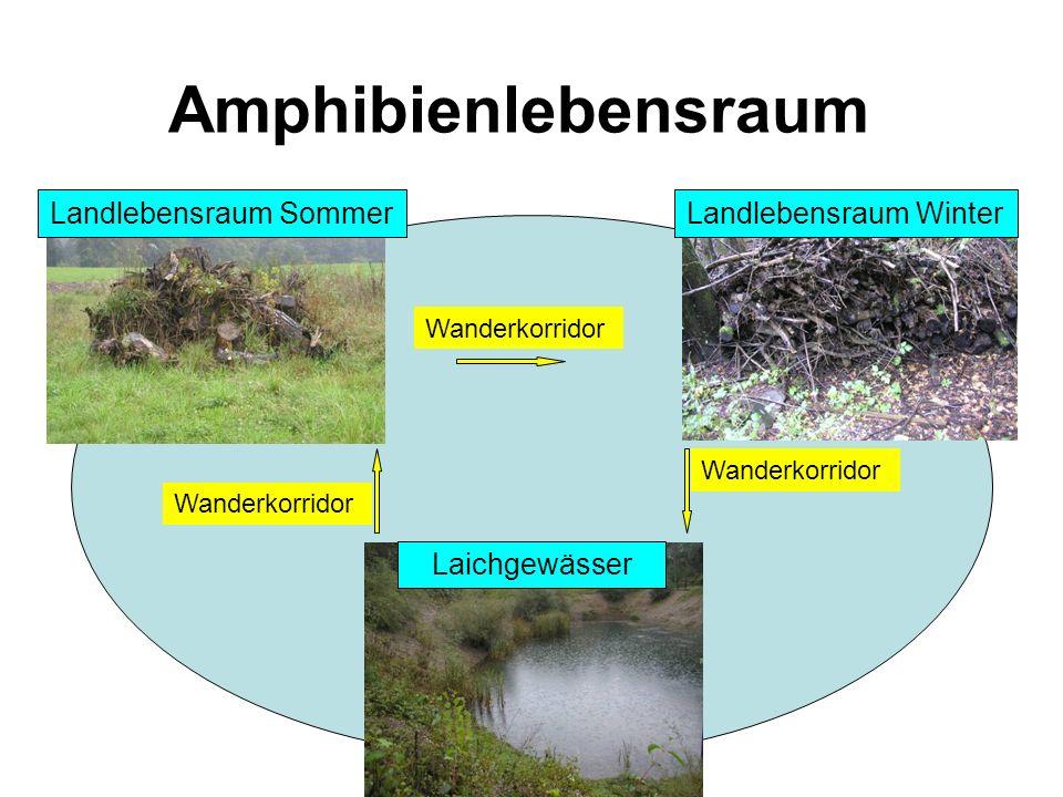 Amphibienlebensraum Landlebensraum SommerLandlebensraum Winter Laichgewässer Wanderkorridor
