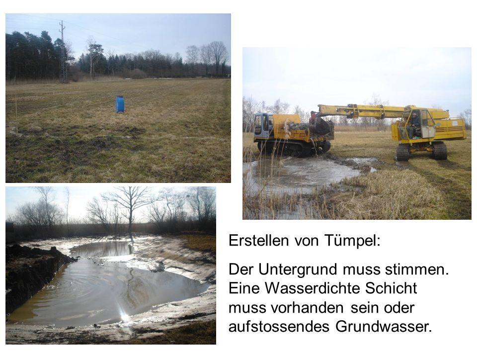 Erstellen von Tümpel: Der Untergrund muss stimmen. Eine Wasserdichte Schicht muss vorhanden sein oder aufstossendes Grundwasser.