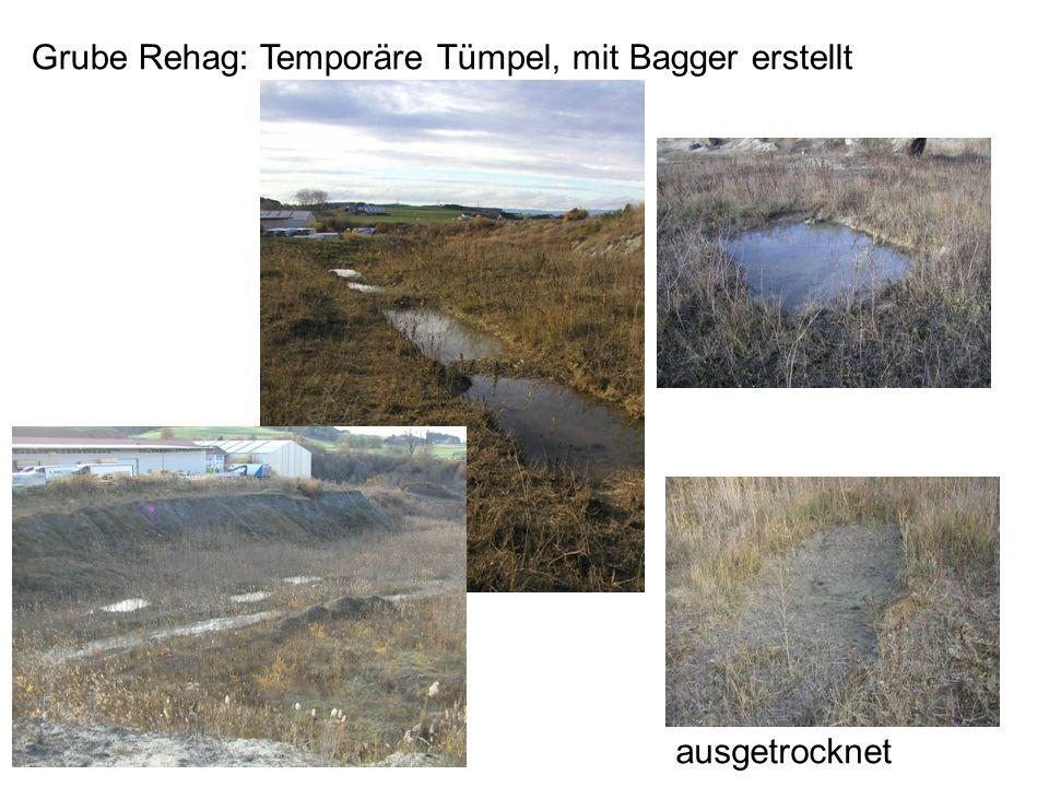 Grube Rehag: Temporäre Tümpel, mit Bagger erstellt ausgetrocknet