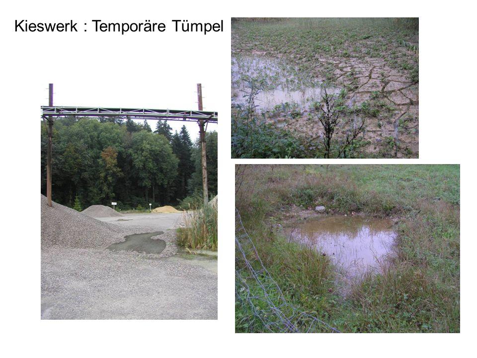 Kieswerk : Temporäre Tümpel