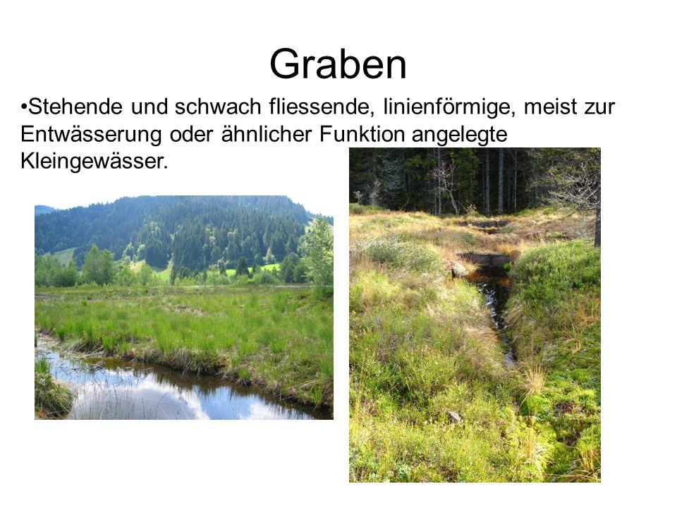 Graben Stehende und schwach fliessende, linienförmige, meist zur Entwässerung oder ähnlicher Funktion angelegte Kleingewässer.