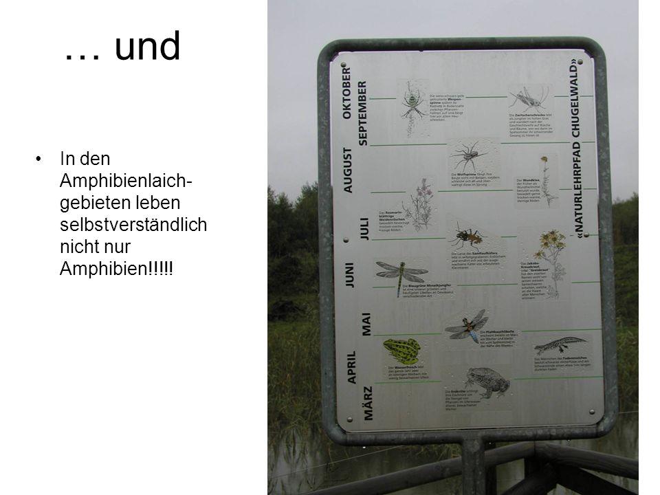 … und In den Amphibienlaich- gebieten leben selbstverständlich nicht nur Amphibien!!!!!