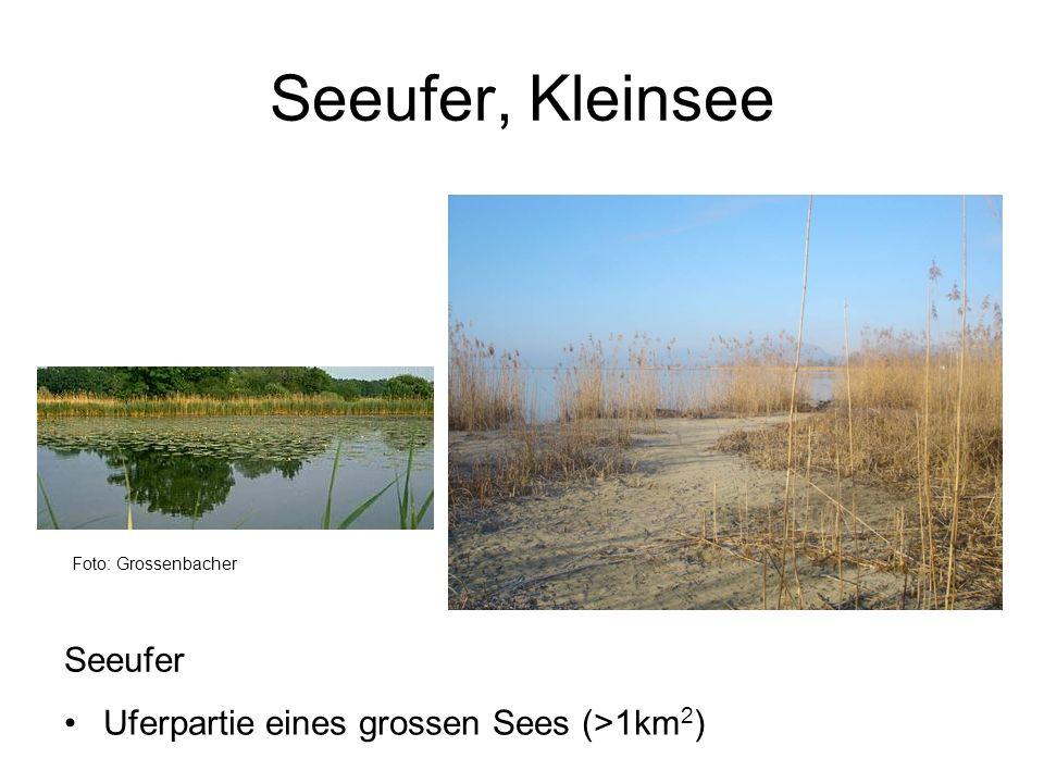Seeufer, Kleinsee Foto: Grossenbacher Seeufer Uferpartie eines grossen Sees (>1km 2 )