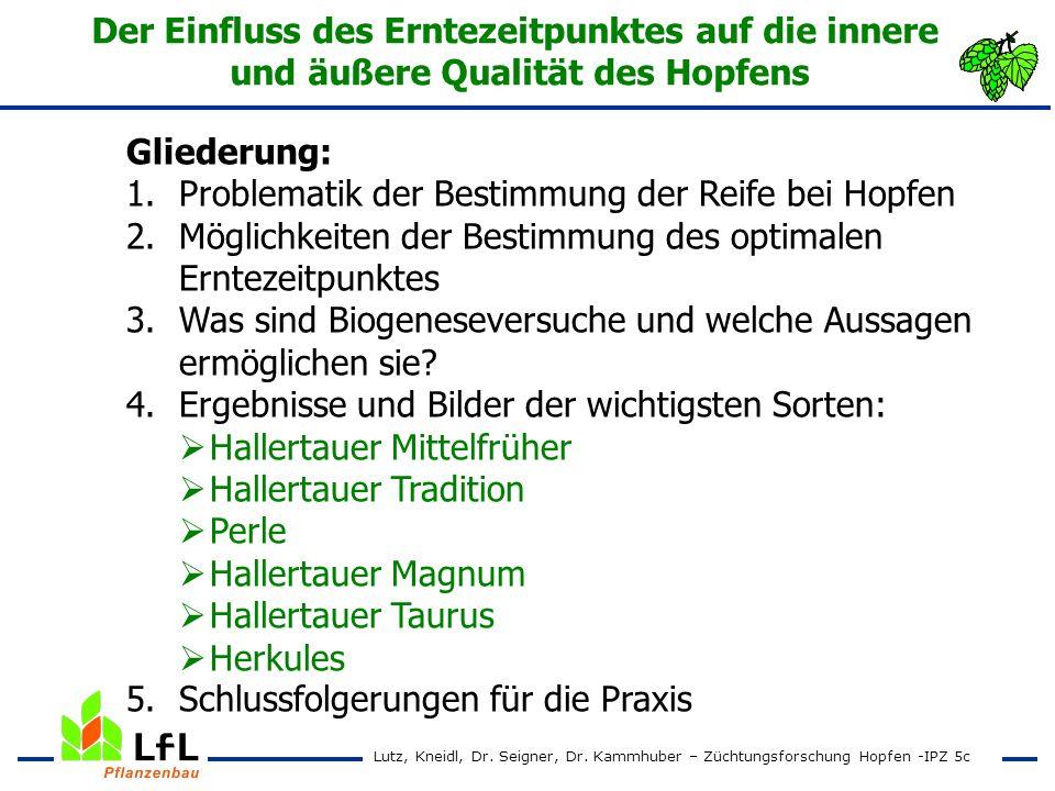 Erntezeitpunktversuch 1995 – 1997 Hallertauer Magnum Alphasäurenertrag in kg/ha Lutz, Kneidl, Dr.