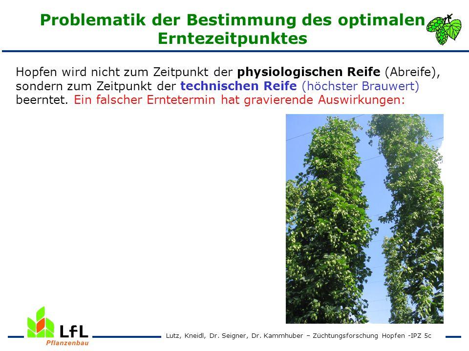 Problematik der Bestimmung des optimalen Erntezeitpunktes Hopfen wird nicht zum Zeitpunkt der physiologischen Reife (Abreife), sondern zum Zeitpunkt der technischen Reife (höchster Brauwert) beerntet.