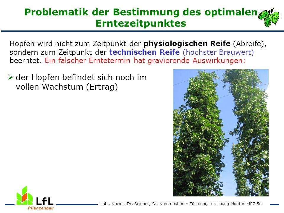 Erntezeitpunktversuch 2004 - 2007 Saphir Ertrag und Alphasäurengehalt Lutz, Kneidl, Dr.