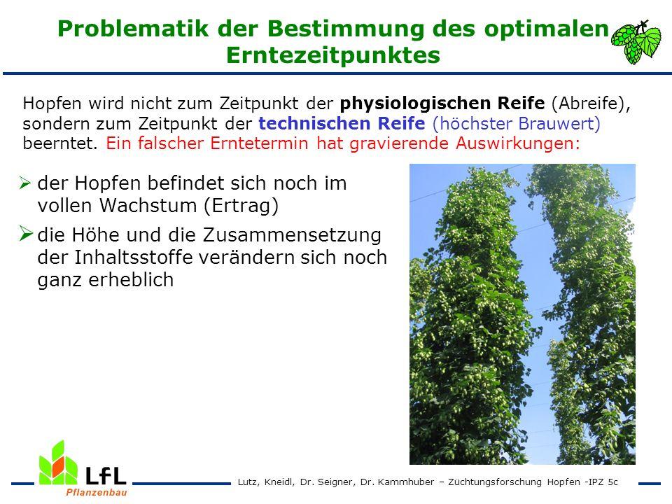 Erntezeitpunktversuch 1999 – 2001 Hallertauer Taurus Ertrag und Alphasäurengehalt Lutz, Kneidl, Dr.