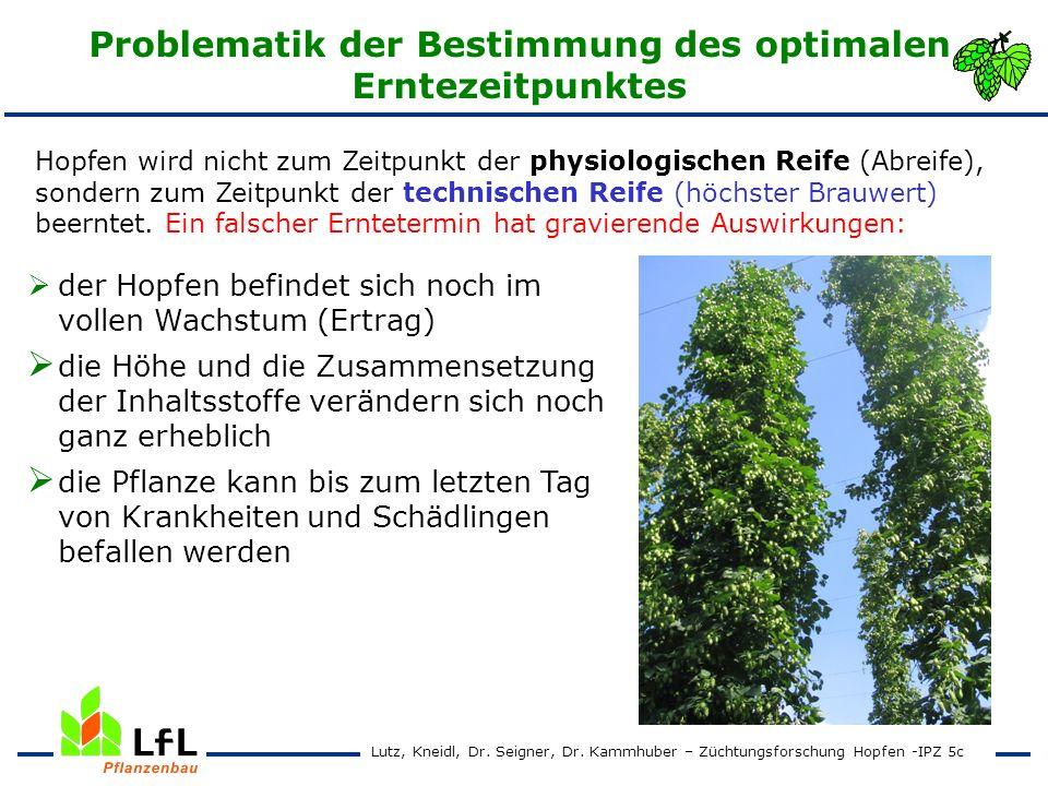 Erntezeitpunktversuch 1995 - 1997 Hallertauer Tradition Ertrag und Alphasäurengehalt Lutz, Kneidl, Dr.
