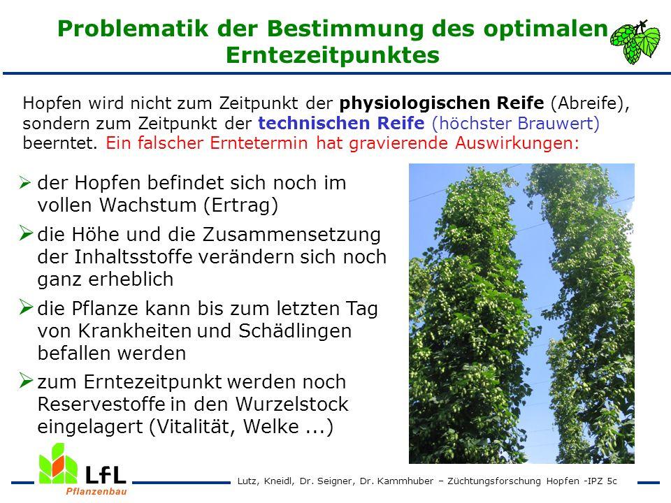 Erntezeitpunktversuch 1995 - 1997 Hallertauer Tradition Alphasäurenertrag in kg/ha Lutz, Kneidl, Dr.