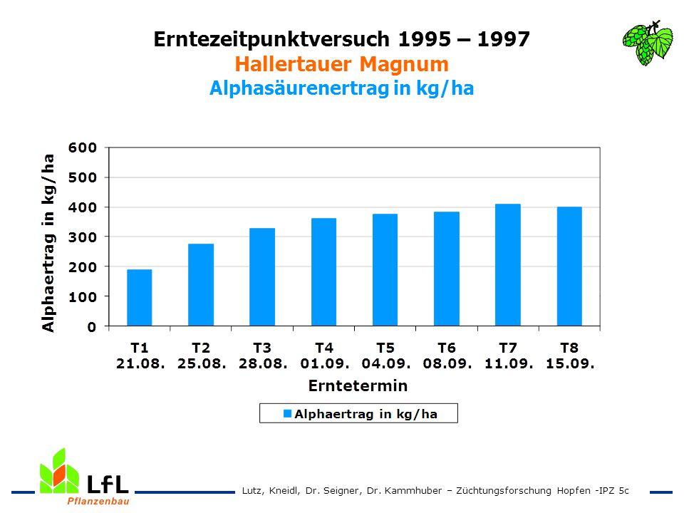 Erntezeitpunktversuch 1995 – 1997 Hallertauer Magnum Alphasäurenertrag in kg/ha Lutz, Kneidl, Dr. Seigner, Dr. Kammhuber – Züchtungsforschung Hopfen -