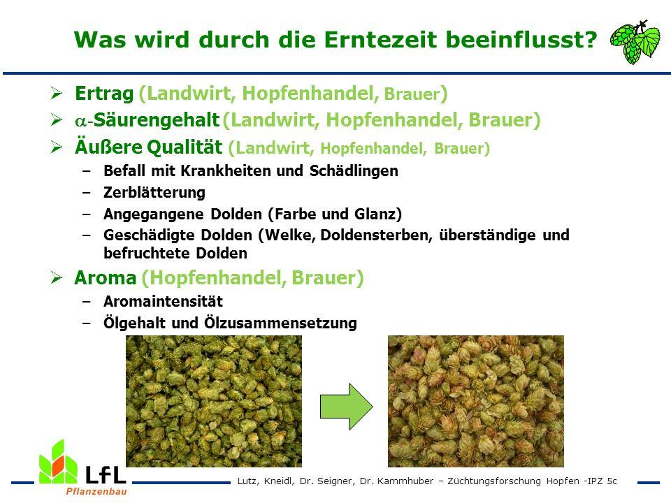 Erntezeitpunktversuch 2004 - 2007 Spalter Select Ertrag und Alphasäurengehalt Lutz, Kneidl, Dr.