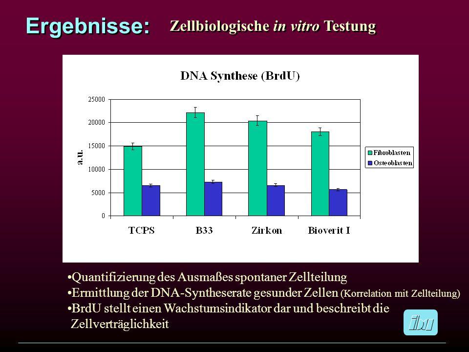 Ergebnisse: Zellbiologische in vitro Testung Quantifizierung des Ausmaßes spontaner Zellteilung Ermittlung der DNA-Syntheserate gesunder Zellen (Korre