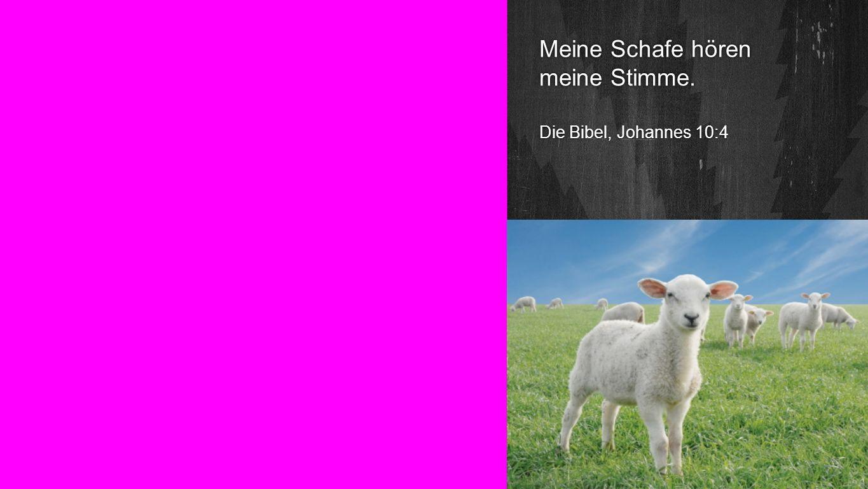 Seiteneinblender Meine Schafe hören meine Stimme. Die Bibel, Johannes 10:4