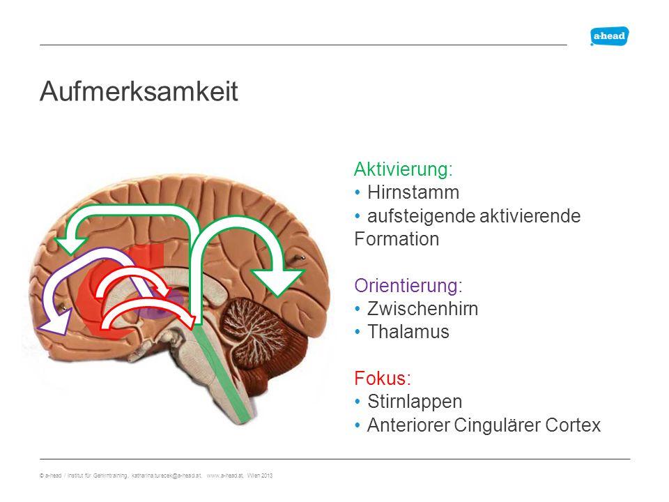 mehr-Stufen Lernplan Nachhaltig Lernen ÜberblickenErarbeitenEinprägen © a-head / Institut für Gehirntraining, katharina.turecek@a-head.at, www.a-head.at, Wien 2013