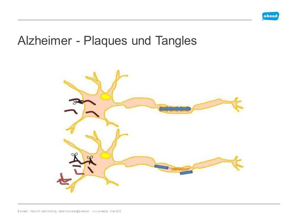 plaques Alzheimer - Plaques und Tangles © a-head / Institut für Gehirntraining, katharina.turecek@a-head.at, www.a-head.at, Wien 2013
