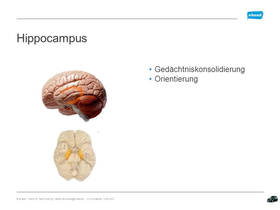 Explizit Wissen Implizit Können Lerninhalte Neuroanatomie Lern- mechanismus Aufmerksamkeit Verknüpfung Wiederholung Explizit implizit © a-head / Institut für Gehirntraining, katharina.turecek@a-head.at, www.a-head.at, Wien 2013