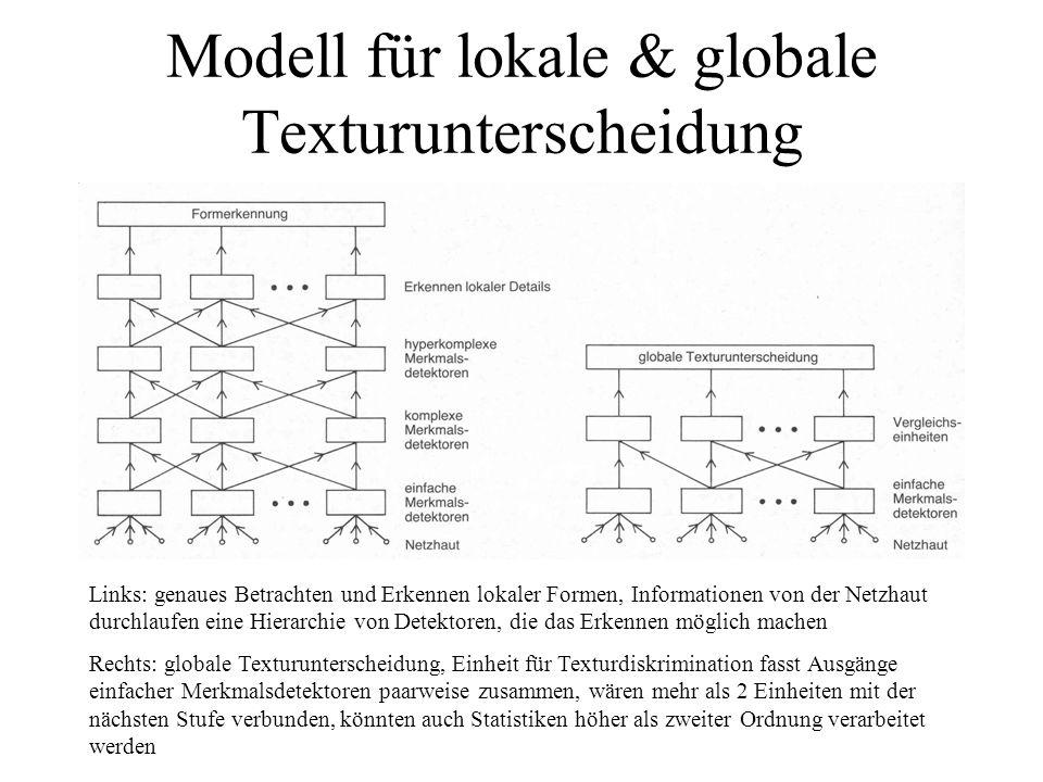 Modell für lokale & globale Texturunterscheidung Links: genaues Betrachten und Erkennen lokaler Formen, Informationen von der Netzhaut durchlaufen ein