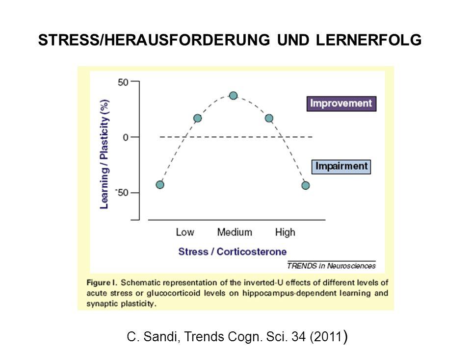 STRESS/HERAUSFORDERUNG UND LERNERFOLG C. Sandi, Trends Cogn. Sci. 34 (2011 )
