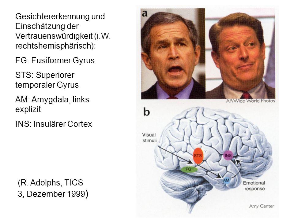 (R. Adolphs, TICS 3, Dezember 1999 ) Gesichtererkennung und Einschätzung der Vertrauenswürdigkeit (i.W. rechtshemisphärisch): FG: Fusiformer Gyrus STS