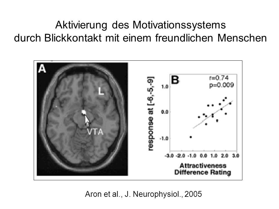 Aktivierung des Motivationssystems durch Blickkontakt mit einem freundlichen Menschen Aron et al., J. Neurophysiol., 2005