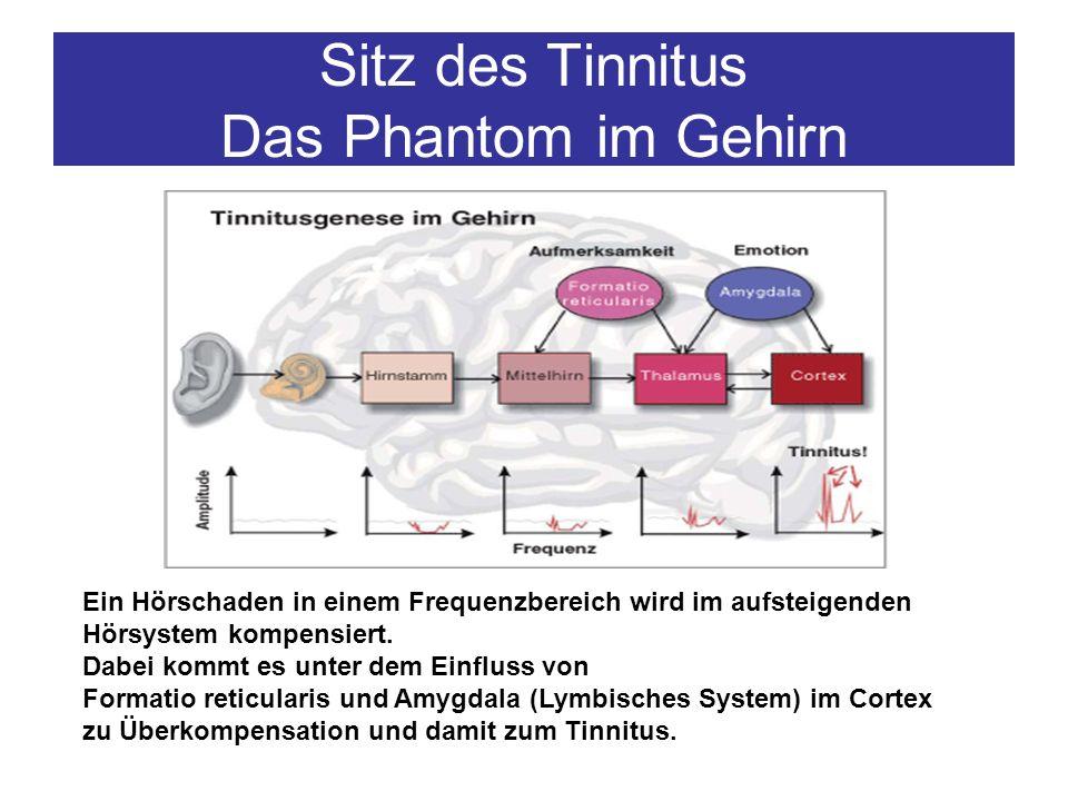 Sitz des Tinnitus Das Phantom im Gehirn Ein Hörschaden in einem Frequenzbereich wird im aufsteigenden Hörsystem kompensiert. Dabei kommt es unter dem