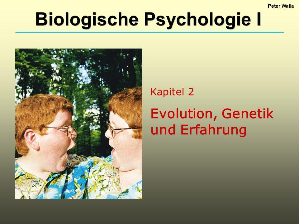 Kapitel 2 Evolution, Genetik und Erfahrung Biologische Psychologie I Peter Walla