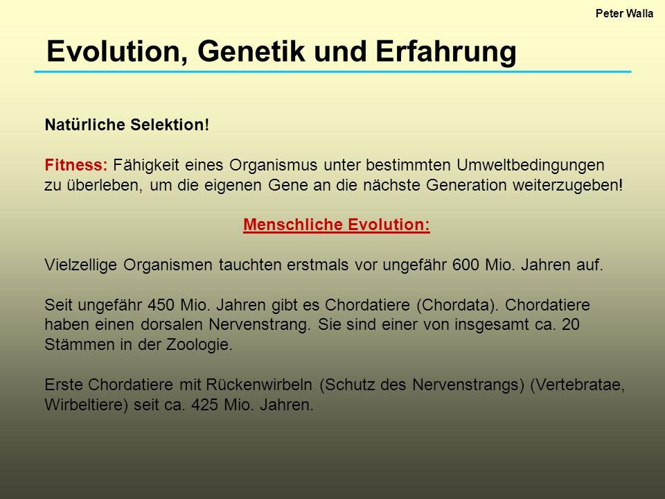 Evolution, Genetik und Erfahrung Natürliche Selektion! Fitness: Fähigkeit eines Organismus unter bestimmten Umweltbedingungen zu überleben, um die eig