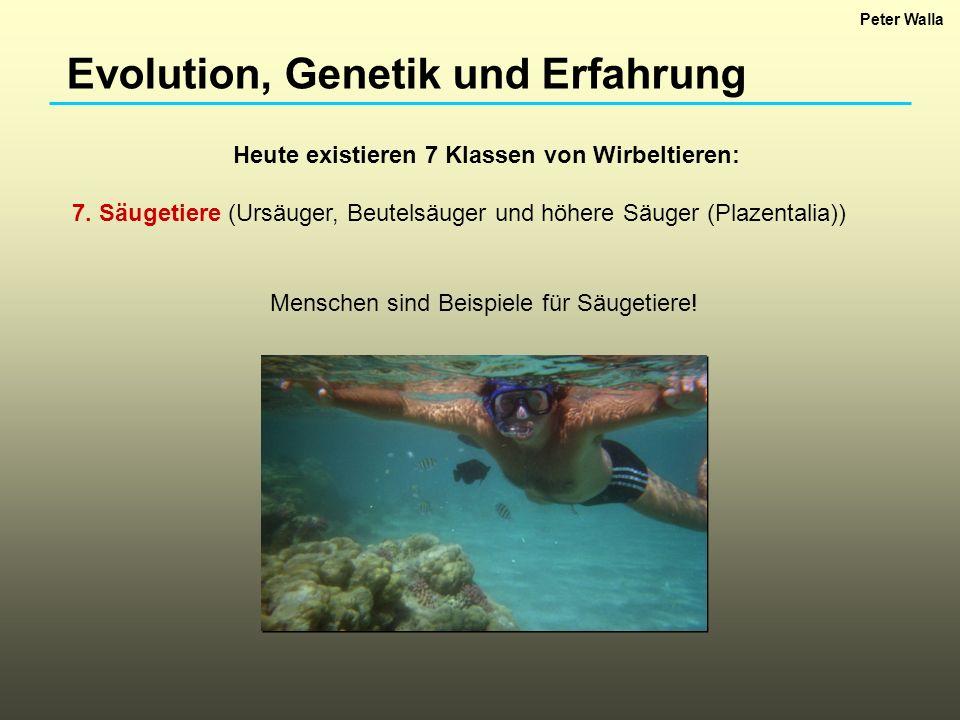 Evolution, Genetik und Erfahrung Heute existieren 7 Klassen von Wirbeltieren: 7. Säugetiere (Ursäuger, Beutelsäuger und höhere Säuger (Plazentalia)) M