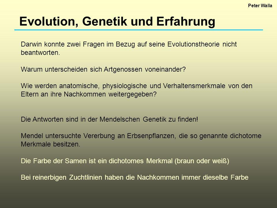 Evolution, Genetik und Erfahrung Darwin konnte zwei Fragen im Bezug auf seine Evolutionstheorie nicht beantworten. Warum unterscheiden sich Artgenosse