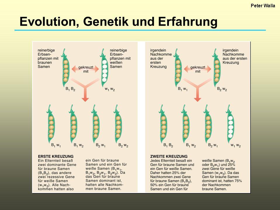 Evolution, Genetik und Erfahrung Peter Walla