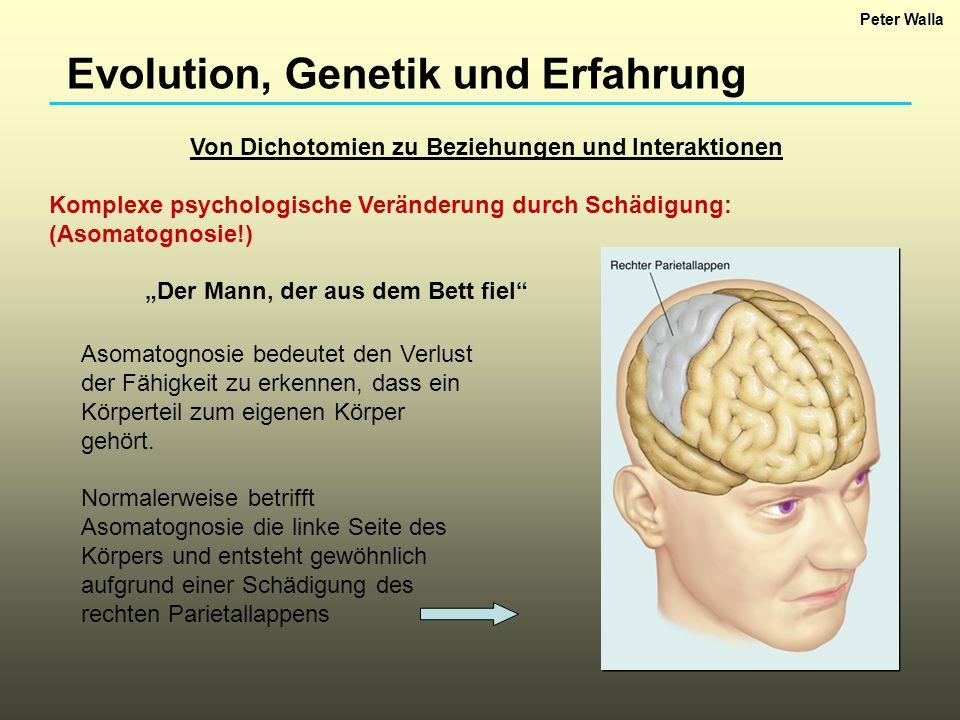 Evolution, Genetik und Erfahrung Von Dichotomien zu Beziehungen und Interaktionen Komplexe psychologische Veränderung durch Schädigung: (Asomatognosie