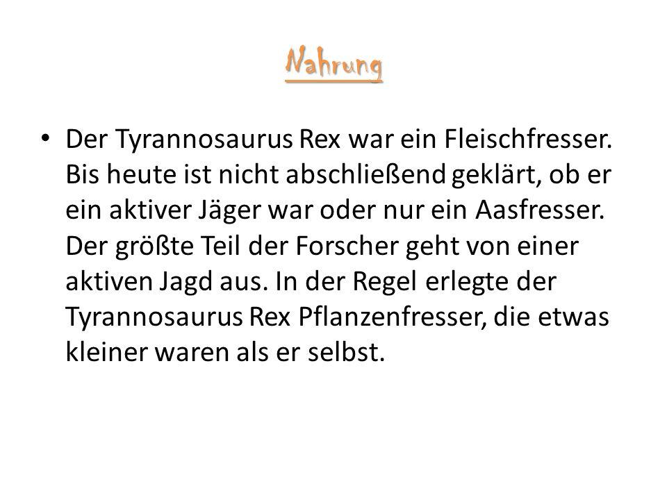 Nahrung Der Tyrannosaurus Rex war ein Fleischfresser.