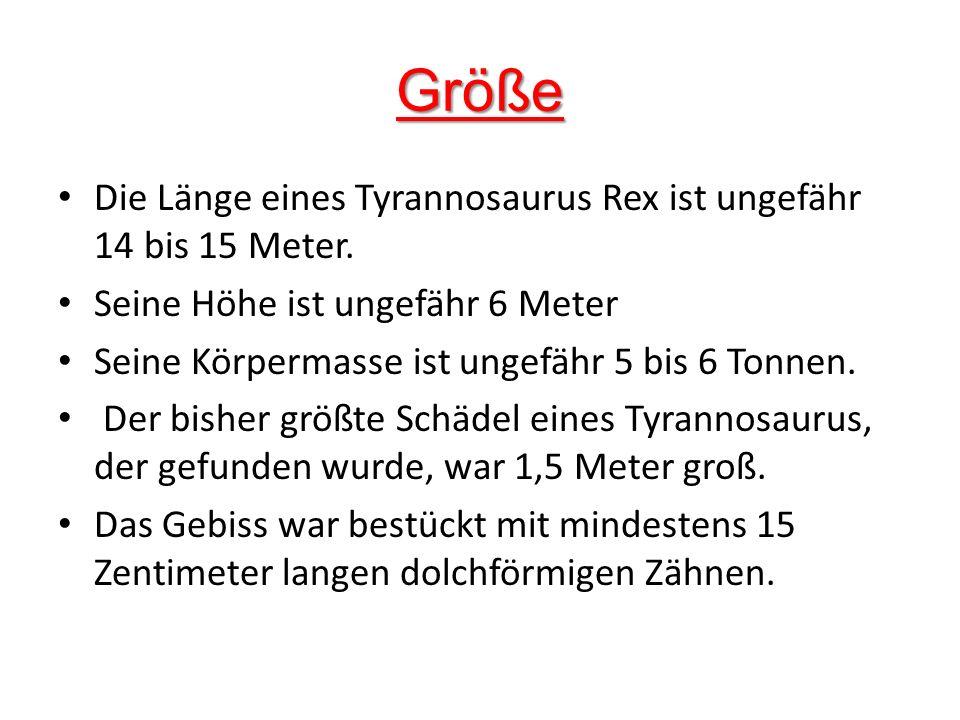 Größe Die Länge eines Tyrannosaurus Rex ist ungefähr 14 bis 15 Meter.