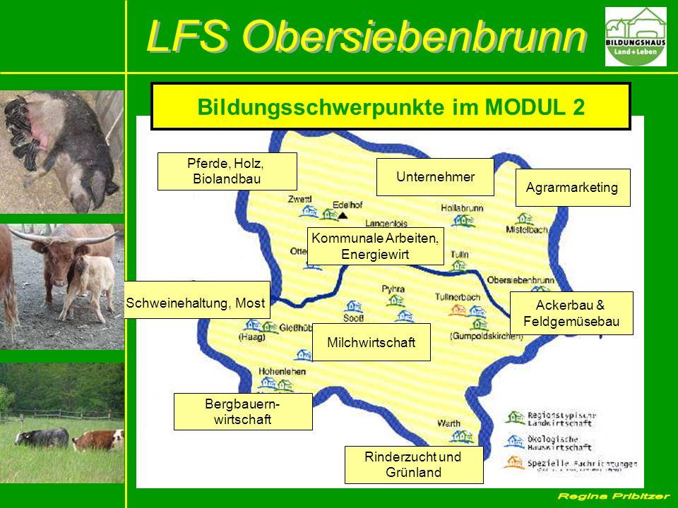 Bildungsschwerpunkte im MODUL 2 Pferde, Holz, Biolandbau Unternehmer Agrarmarketing Ackerbau & Feldgemüsebau Schweinehaltung, Most Bergbauern- wirtsch
