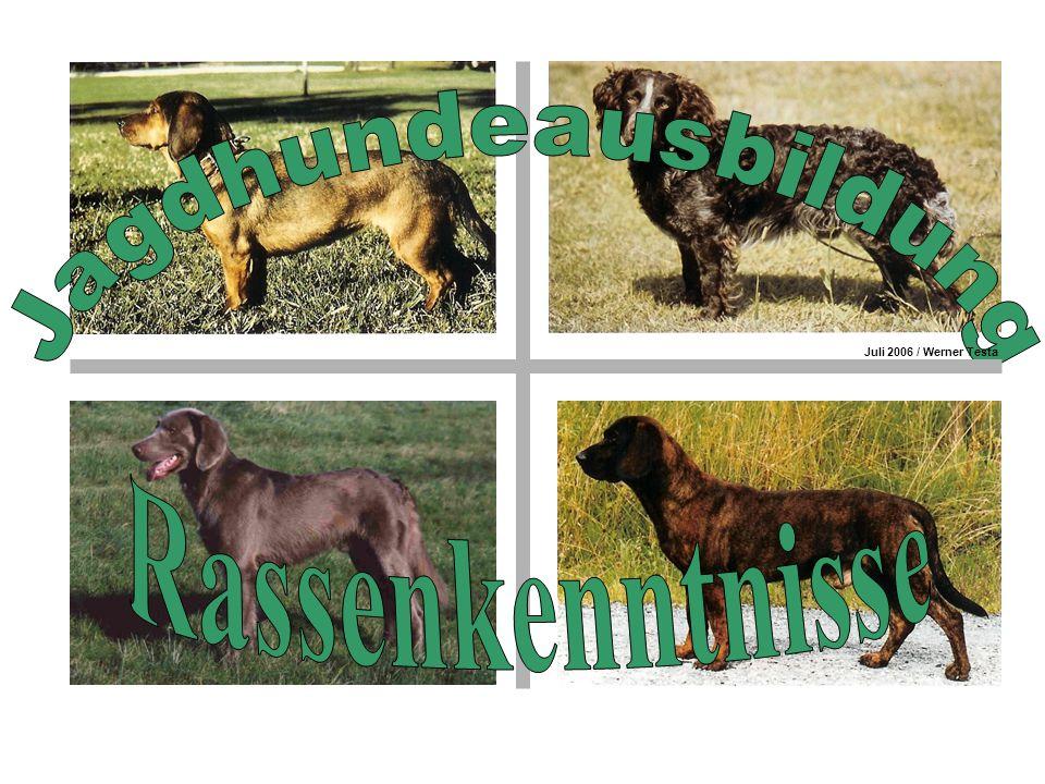 Rasse: Rassegruppe: Berner Niederlaufhund (Glatthaar) Schweizer Laufhunde