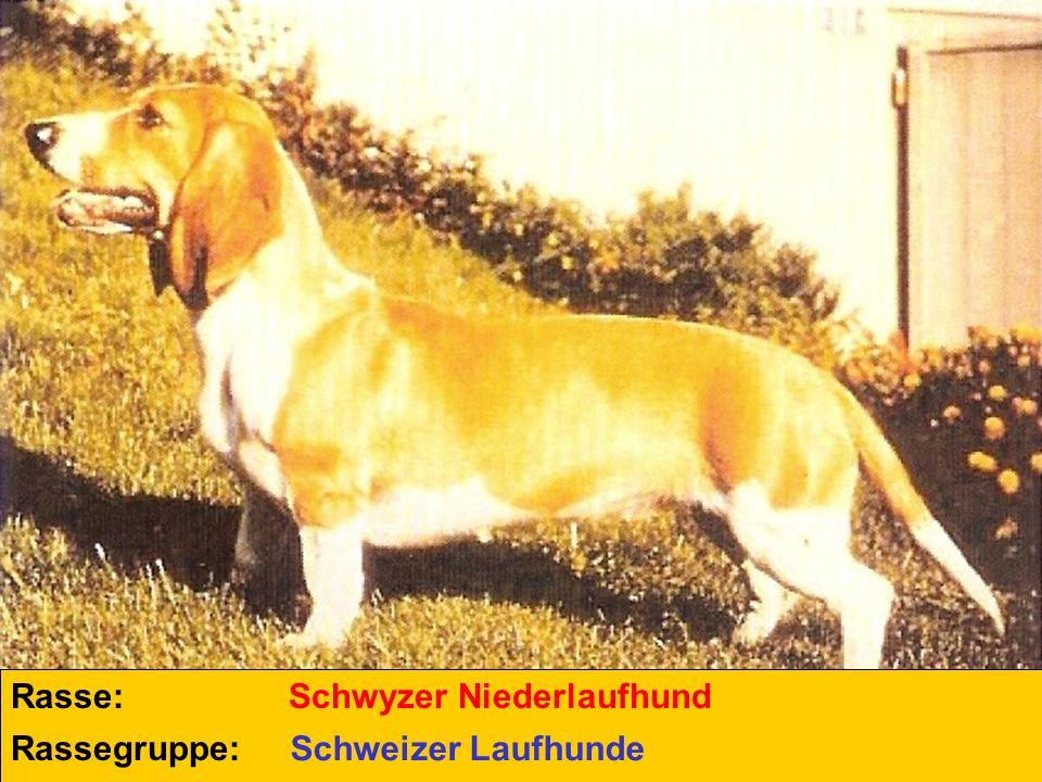 Rasse: Rassegruppe: Schwyzer Niederlaufhund Schweizer Laufhunde