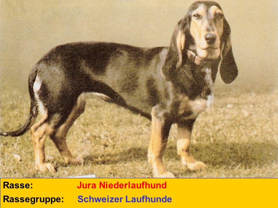 Rasse: Rassegruppe: Jura Niederlaufhund Schweizer Laufhunde