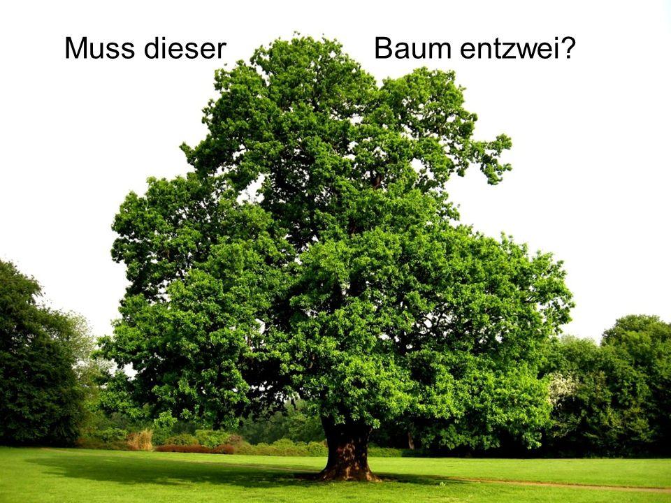 Muss dieser Baum entzwei?