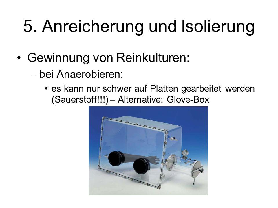5. Anreicherung und Isolierung Gewinnung von Reinkulturen: –bei Anaerobieren: es kann nur schwer auf Platten gearbeitet werden (Sauerstoff!!!) – Alter