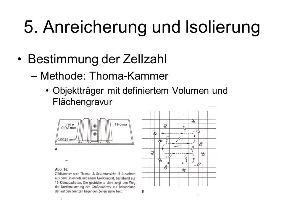 5. Anreicherung und Isolierung Bestimmung der Zellzahl –Methode: Thoma-Kammer Objektträger mit definiertem Volumen und Flächengravur